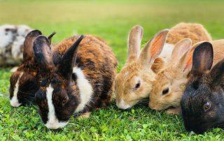 rabbit feed pellet making